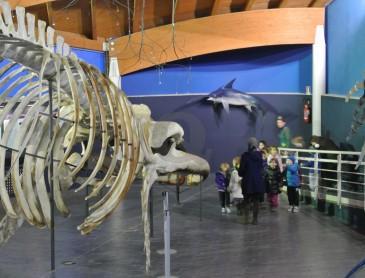 La Sala del Mare Museo di Storia Naturale