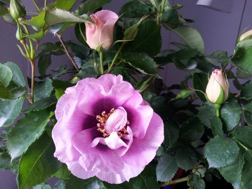 foto tratta da gardenclublivorno.it