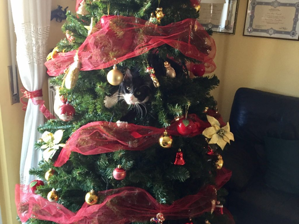 l'albero di gatto Geppetto