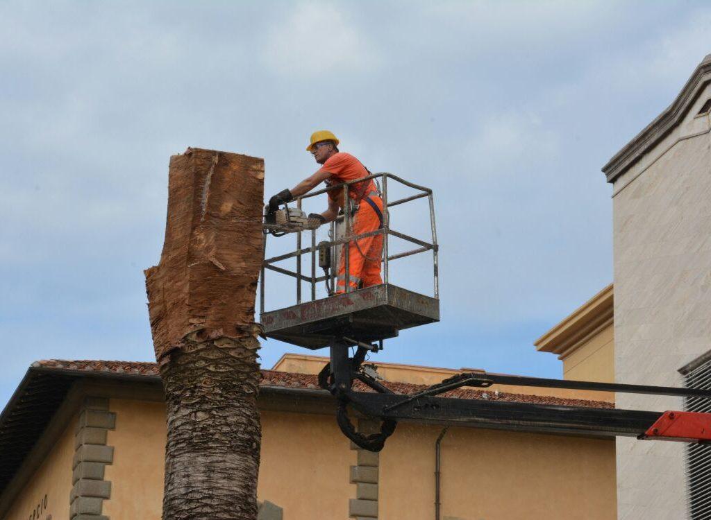 Ufficio Verde Comune Di Livorno : Abbattute le palme in piazza del municipio quilivorno