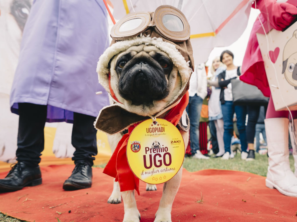 Ugopiadi Sono Stati Oltre 150 I Cani Partecipanti Alle Olimpiadi