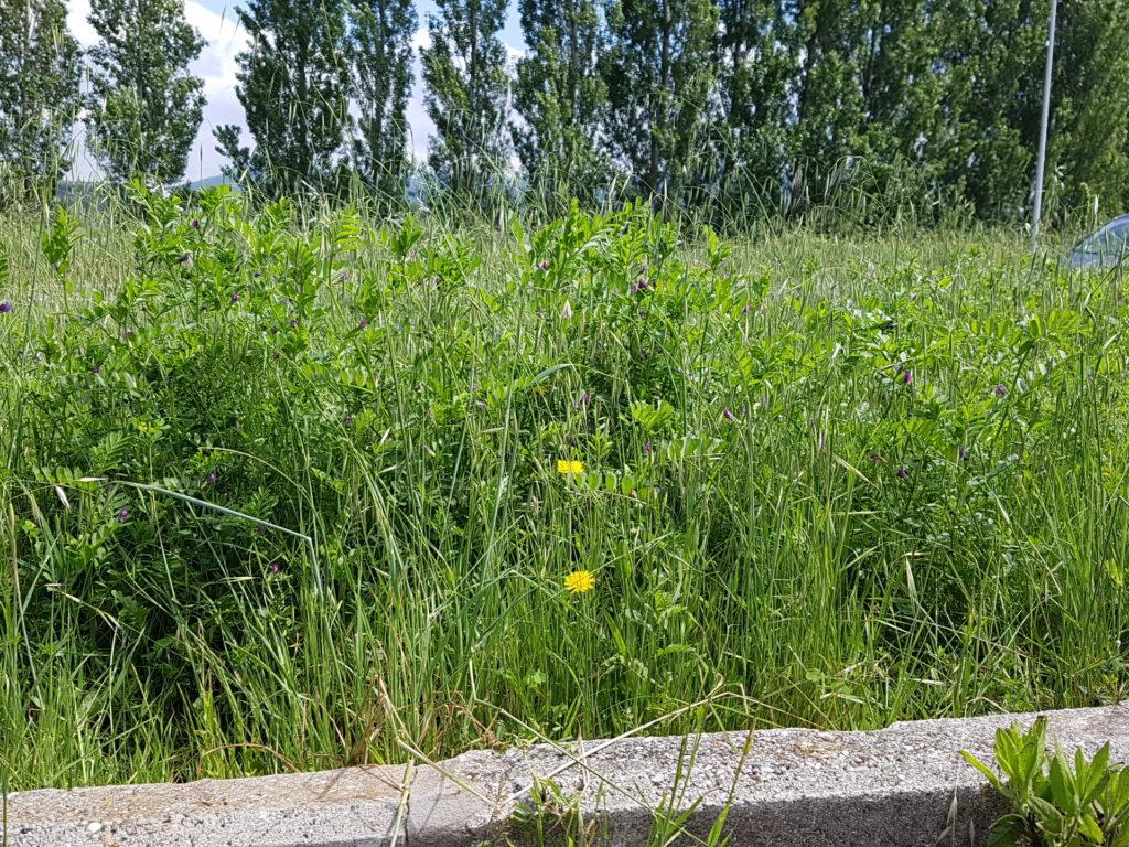 Ufficio Verde Comune Di Livorno : In ufficio si lavora meglio se ci sono piante greenreport